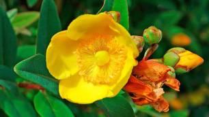 xp3-dot-us_DSC_4433-yellow-blossom-3