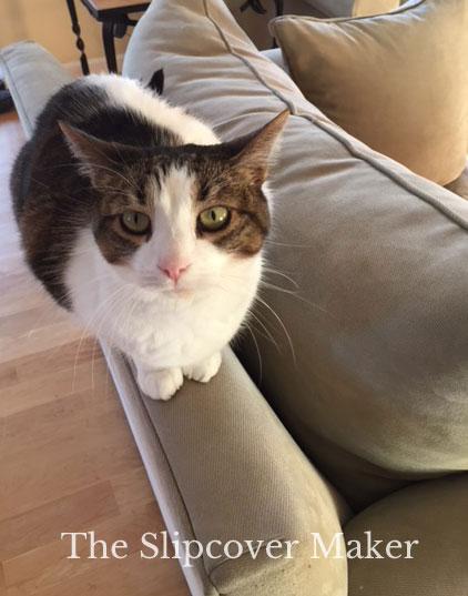 Cat Friendly Slipcover Fabrics