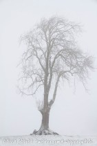 A ghostly tree