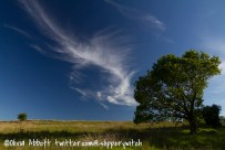 An appealing cloud and tree combination