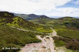 conwy mountain-8