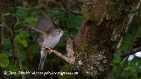spotty fly-3