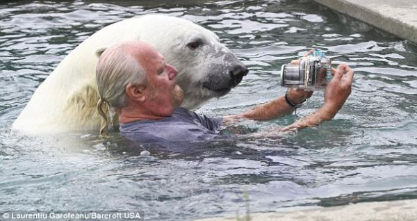 Yes That Is A 800 Pound Polar Bear Watch What The Bear