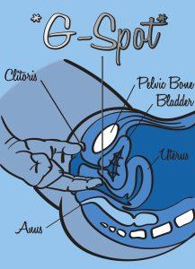 G-Spot - sliquid Says - Sliquid Blog - Natural Lubricants