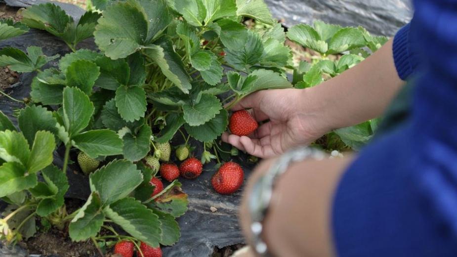 Работа в селското стопанство в Португалия