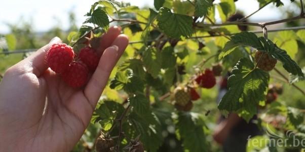 Сезонна работа в селското стопанство в Португалия