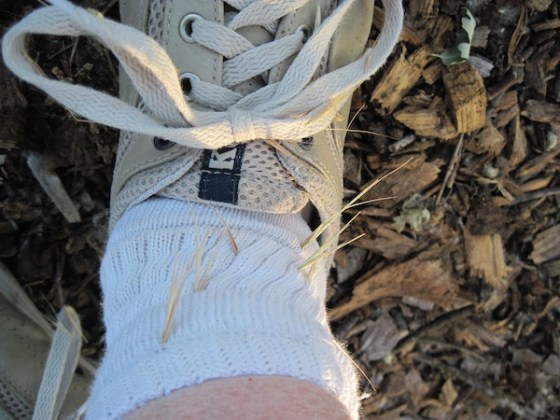 My shoe and sock were full of foxtail stickers stabbing through my socks and shoes.