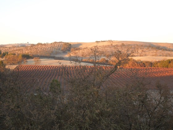 Vineyards on Twelve Oaks Drive in January