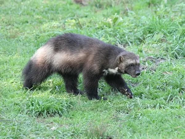 Bumbling Bear