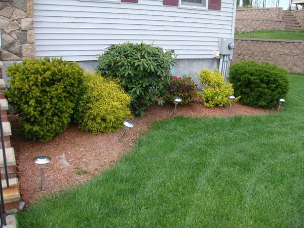 simple backyard landscaping