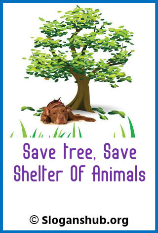 199 Best Save Tree Slogans And Taglines With Posters