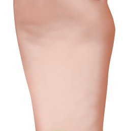 plantar fasciitis foot diagram vertical [ 656 x 1597 Pixel ]