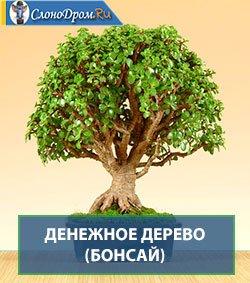 Денежное дерево Бонсай