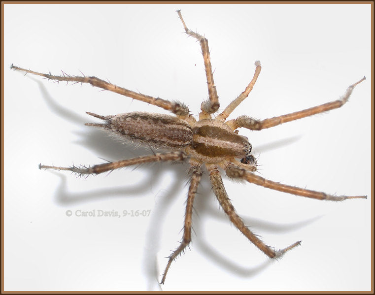 SLO Pest And Termite Spiders Many People Fear Or Dislike