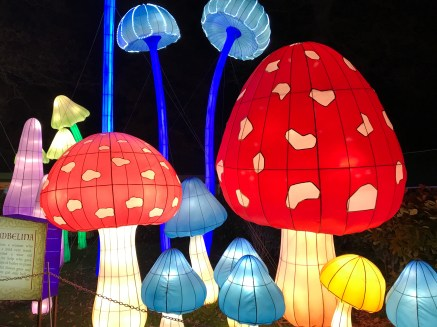 Longleat Festival of Light mushrooms