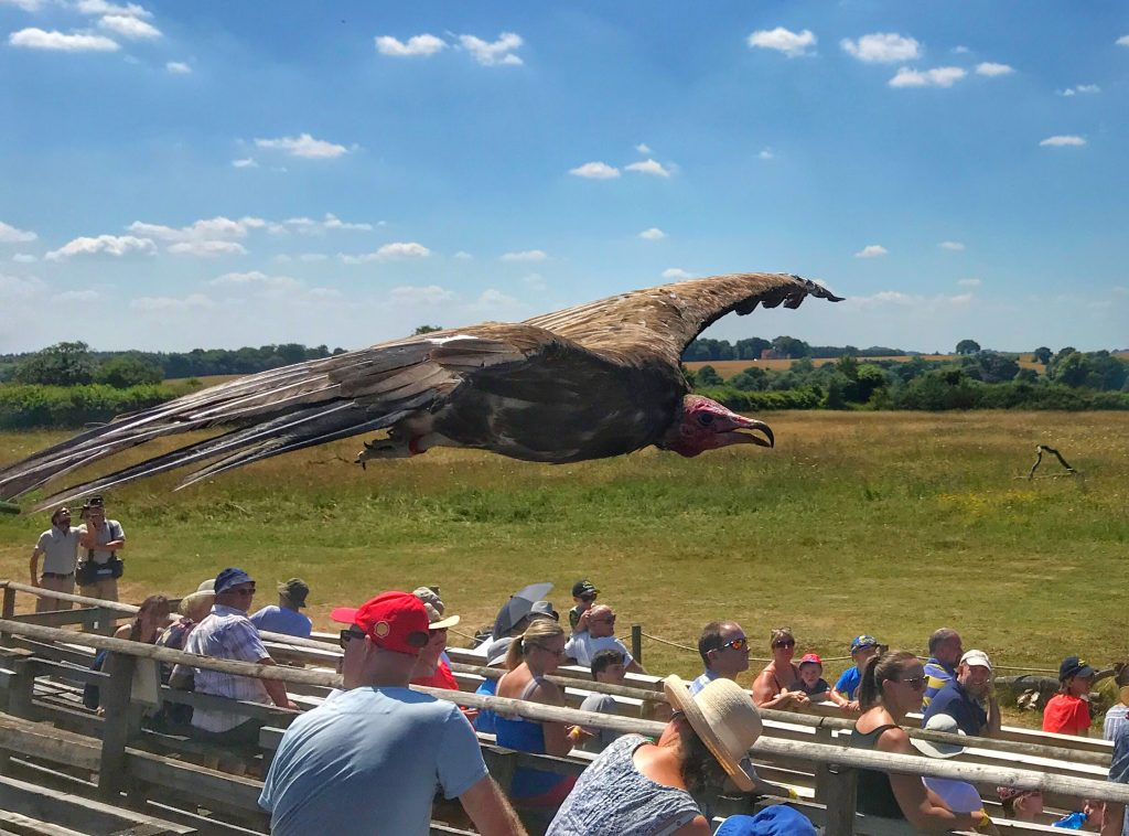 Vulture Hawk Consercancy Trust Andover
