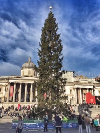 london-trafalgar-square-christmas-tree