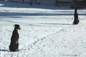 3-snow-sentries djordan djingo