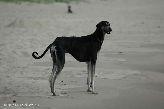 5-djingo-beach-conf2