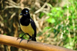 There are lots of birds in the national park