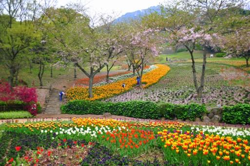 Tulip park