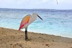 maldives (14)