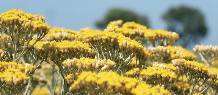 http-::nature-to-nurture.co.uk