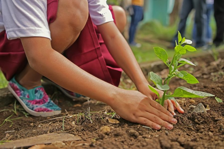 Planting Plantation Arbres Trees Child Enfant