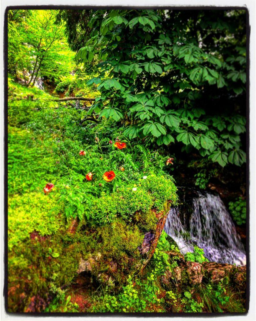 Jaysinia samoens jardin