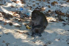 Monkey Beach, Koh Phi Phi, Thailand, March 2014. Photo: ©SLOWAHOLIC
