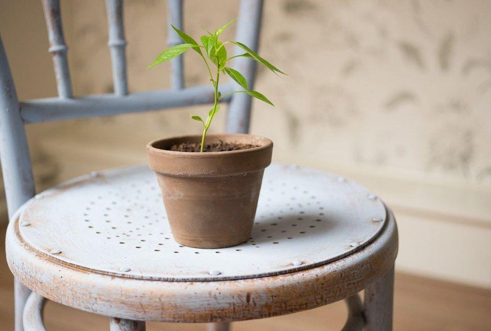 talleres vida sostenible