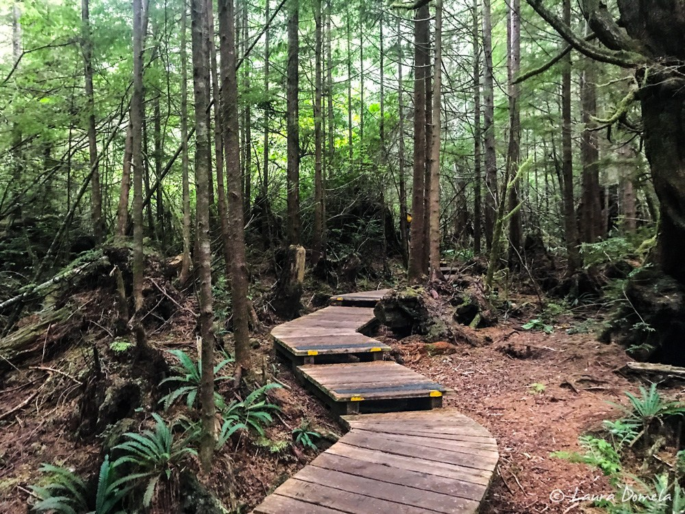 Boardwalk trail to Hot Springs