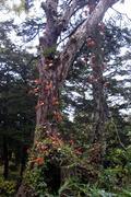 尾瀬の紅葉