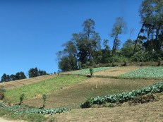 fields along the narrow road