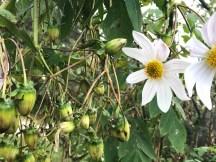 flowers9