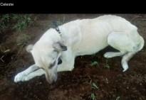 street dog when rescued Dec 17