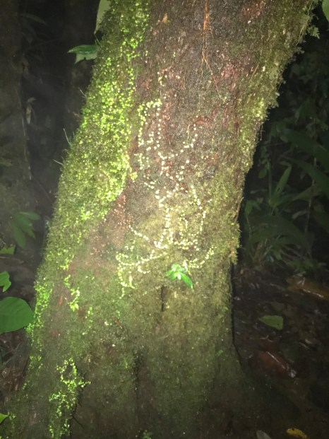 neon tree in jungle