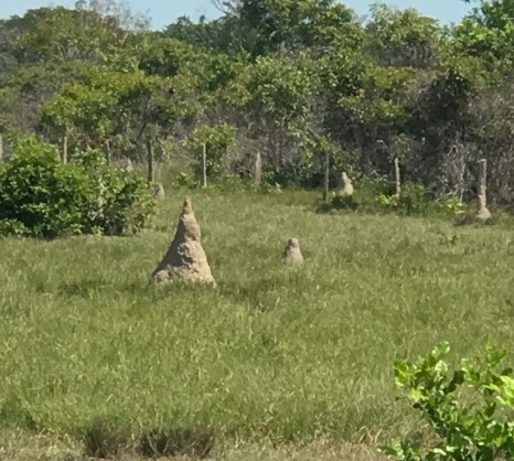 anthill field