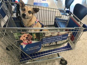 nica shopping