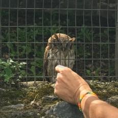 parque condor burrowing owl1