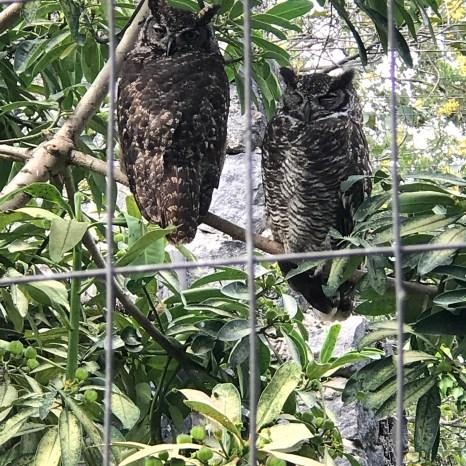 parque condor owl