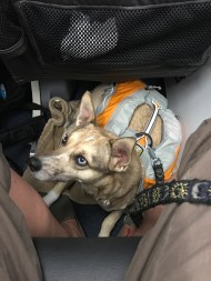 nica on airplane floor