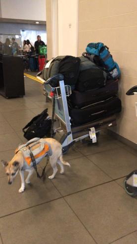 airport dog..JPG