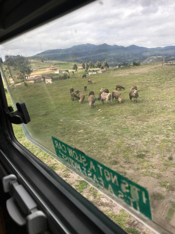 sheep visiting..jpg