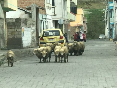 villagestreet sheep.JPG
