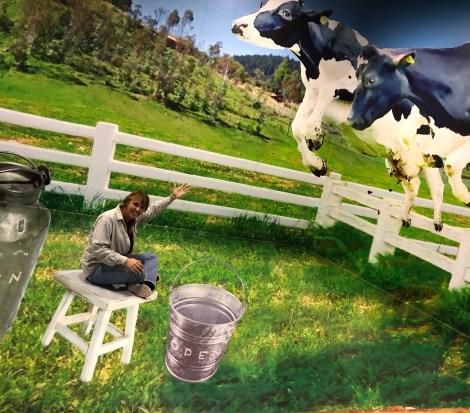 leaping cows.JPG