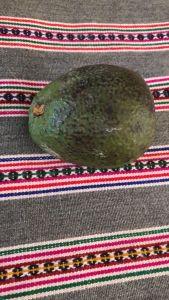 avocado palta