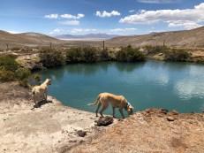 hot springs in the desert