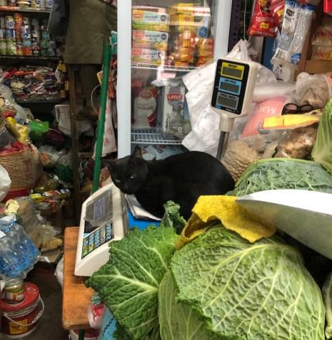 market cat.