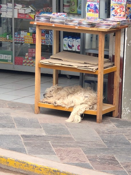 market dog sleeping.